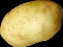 plant de pomme de terre el beida