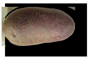 Triskalia plant de pomme de terre frivol