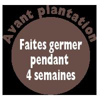 avant-plantation
