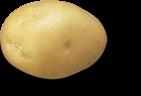 plant de pomme de terre delice
