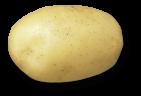 plant de pomme de terre europa