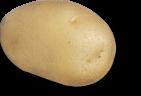 plant de pomme de terre fridor