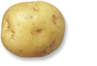 plant de pomme de terre oceania