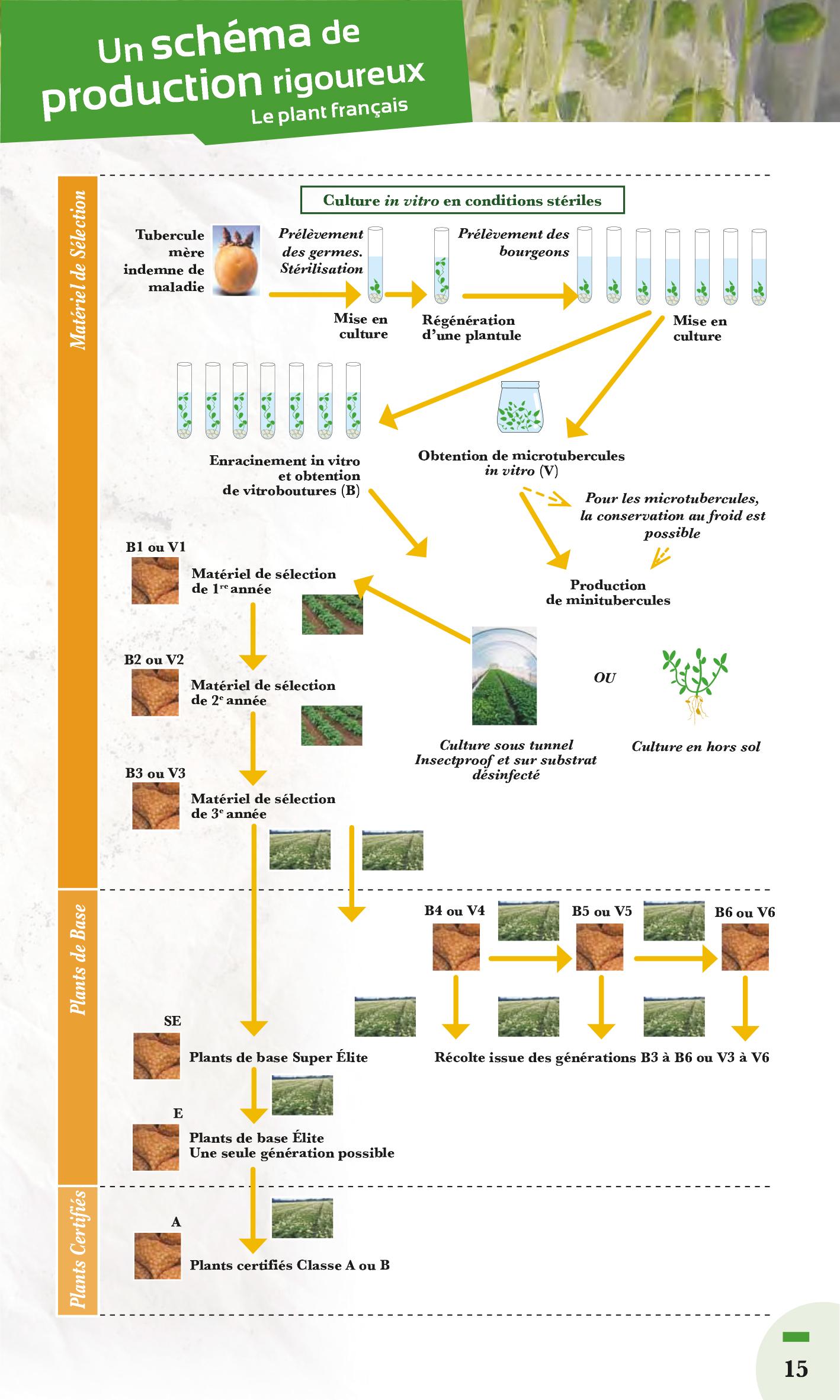qualité schema genealogique