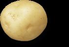 Sistema plant de pomme de terre