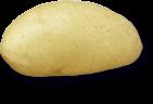 plant de pomme de terre Spunta