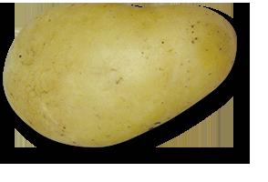charmeuse triskalia seed potatoes
