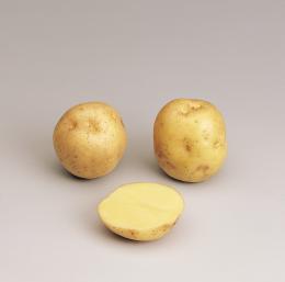oceania triskalia seed potatoes