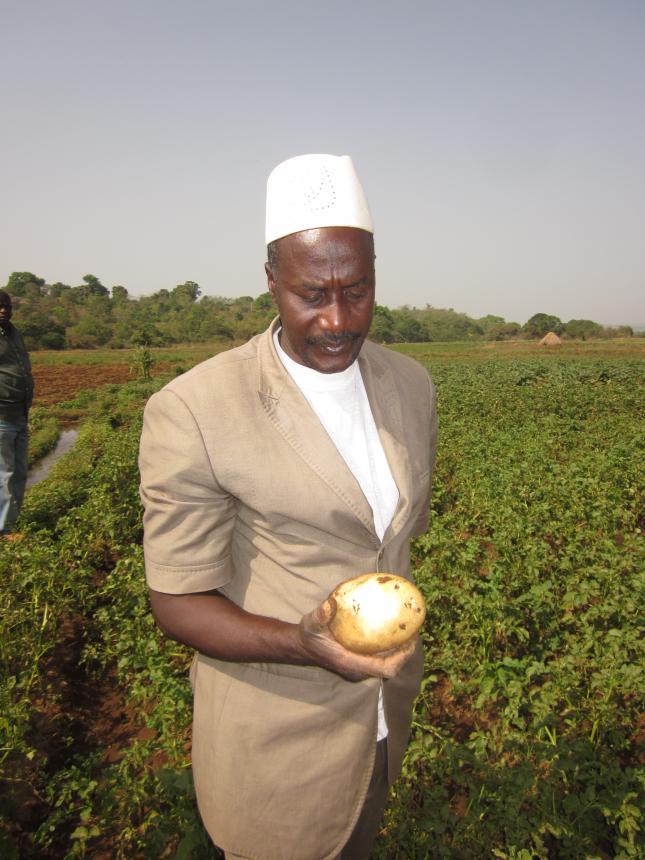 Récolte de la variété Speeda à Kalamata, avril 2014