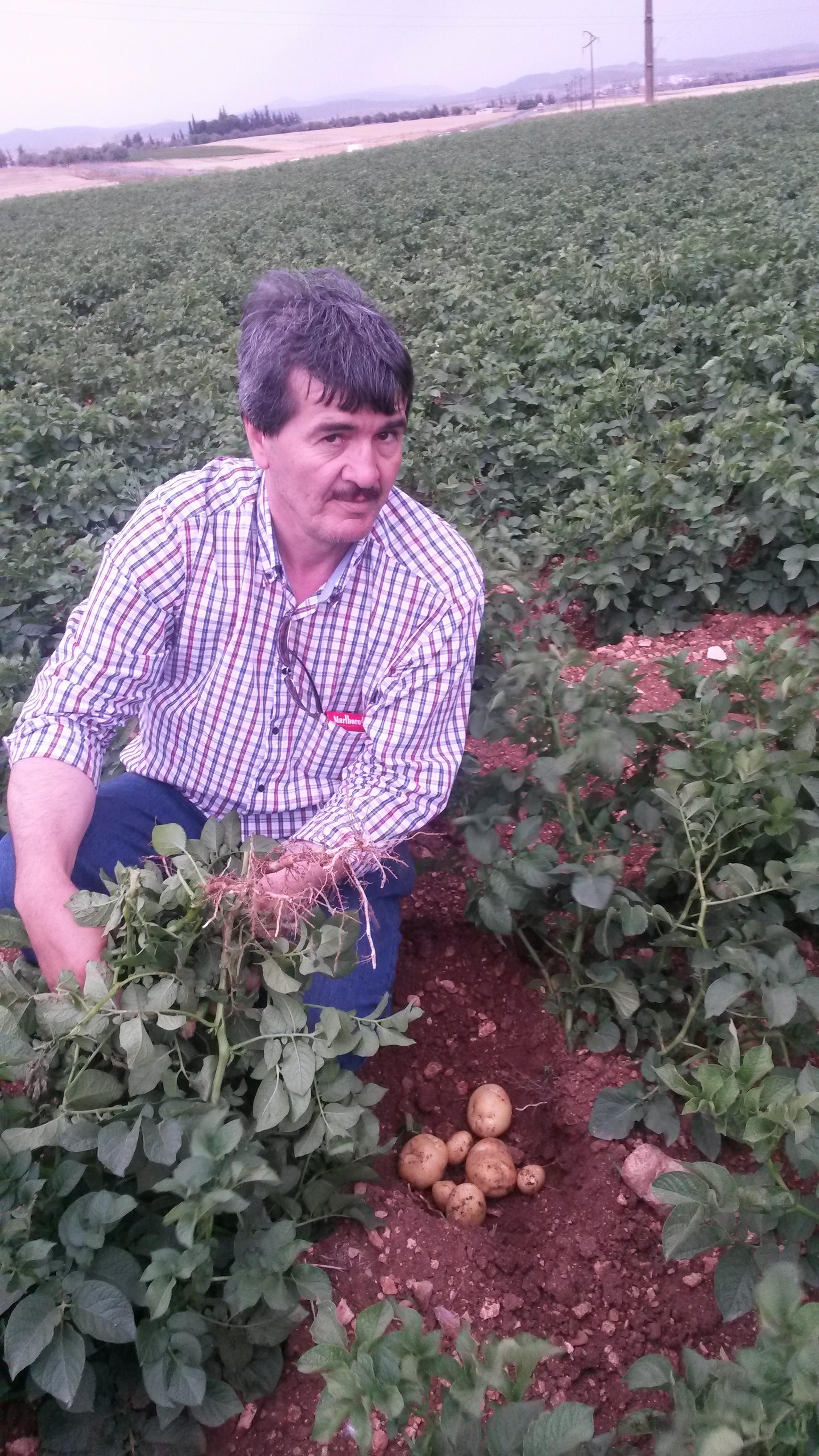 Farouk Slimani, présentant de l'Oceania à 70 jours de développement, dans la zone de Bouira.