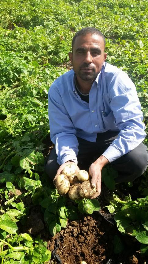 Ahmad Al Korashi, producteur de pomme de terre dans la vallée du Jourdain